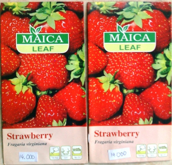 Benih Strawberry Maica Leaf
