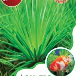 aquatic_grass_maica