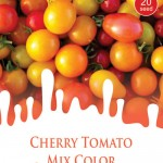 tomat_cherry_mix_maica