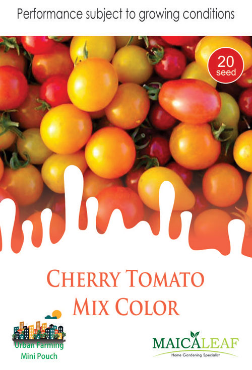 Tomat Cherry Mix Maica