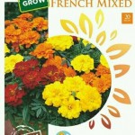 marigold-french_mixed_maica