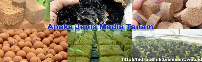 Pilihan media tanam dalam hidroponik