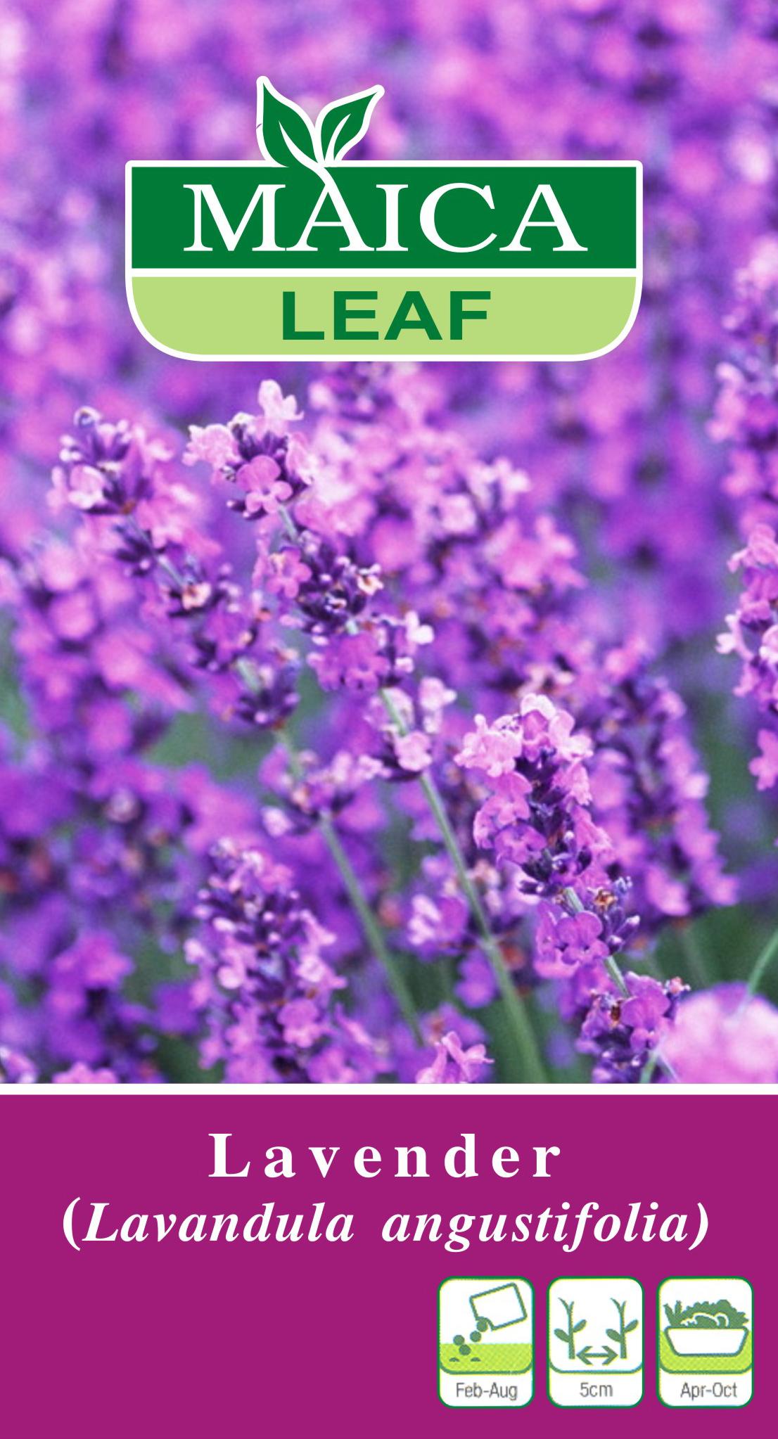 Benih Lavender