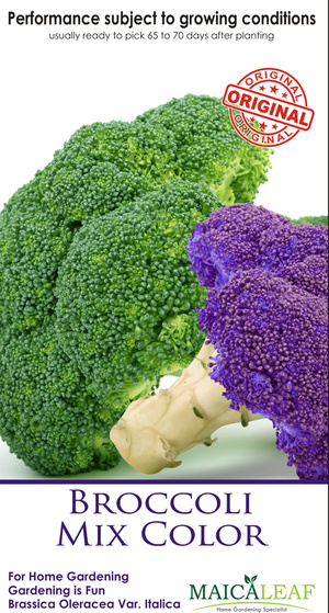Brokoli Mix Maica