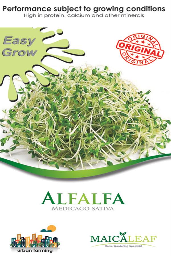 Rumput Alfalfa