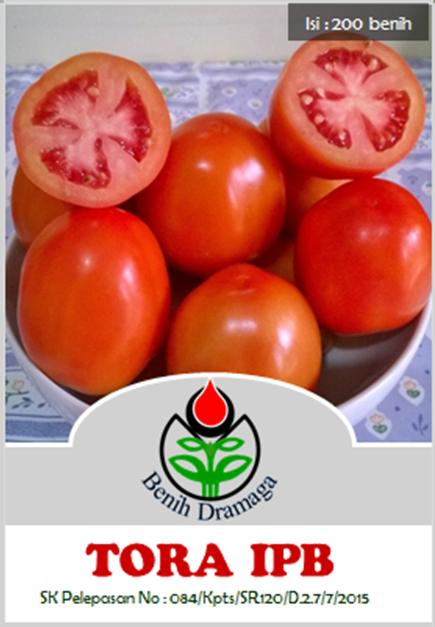 Tomat Tora IPB