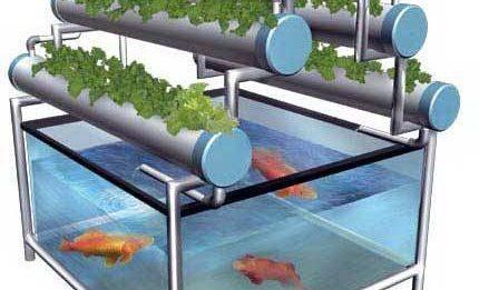 Aquaponik dan hidroponik, sama atau beda?
