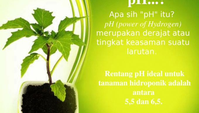 Menurunkan pH pada tanaman hidroponik